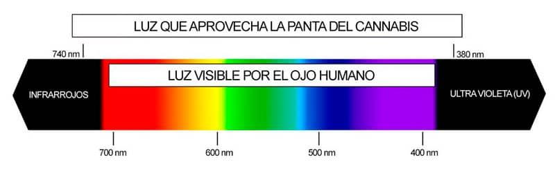 ledcultivo-6-c.jpg